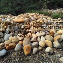 广东省广州市、优质上水石假山石、鹅卵石