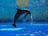 港澳3天2晚海洋公园+迪士尼乐园双园游+澳门威尼斯度假村天天出团!
