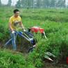 西藏青稞割晒机艾叶秸秆收割机鱼草牧草割晾机