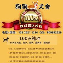 广州买宠物狗,请认准广州狗狗犬舍