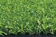 聊城一些学校都用什么样的人造草坪?