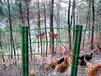 生产厂家制作荷兰网护栏,专供养鸡场等养殖场用,质量保证价格公道,欢迎来电咨询!!
