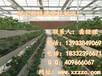 草莓基质栽培?#38469;酢?#33609;莓无土栽培槽、滴灌种植槽、基质栽培种植成本、草莓栽培槽