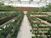 草莓无土栽培槽、基质栽培槽、立体种植槽架、厂家、地址、电话