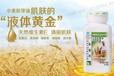 深圳南山区南头哪里有安利产品南山区南头安利公司