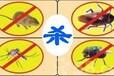 苍蝇药销售西安苍蝇药代理垃圾场灭苍蝇