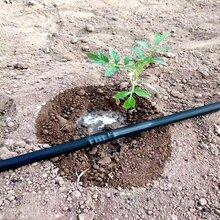 农业水肥一体化技术绿化苗木水肥一体机水肥一体化滴灌技术