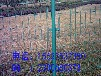 丝网厂家直销吉林庭院铁丝网养殖双边护栏网现货供应