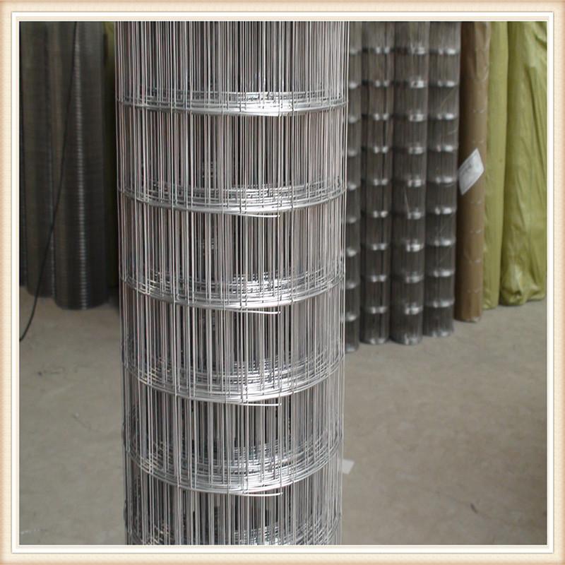 厂家大量供应出口质量电焊网圈玉米镀锌电焊网pvc电焊网