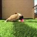 草坪厂家直销,阳台人造草坪,装饰,绿植,仿真草坪