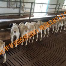 羊长的慢,原因解析及改善措施图片