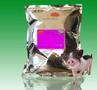 金宝贝仔猪发酵床菌种图片