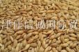 大量出售进口大麦,适用猪,家禽,牛,厂家直销,价格合适
