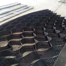 滤疏水格栅室护坡固土塑料巢框架护坡防护格打孔滤水边坡植草格图片