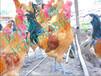 酉阳土鸡苗哪儿买酉阳土鸡价格自生源青脚土鸡苗