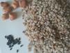 山东石英砂滤料批发价格120元每吨