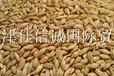 天津佳信诚长期供应进口大麦/澳麦/法麦价格实惠