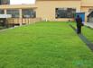 广州屋顶绿化屋顶绿化设计屋顶绿化效果图屋顶绿化创业项目都市农夫-维尔环境