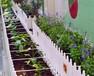 都市农夫城市屋顶绿化效果图_家庭屋顶阳台菜园设计