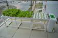 深圳屋顶绿化项目工程_屋顶绿化效果图设计公司_全自动灌溉种植系统招商代理