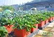 西安屋顶绿化公司_全自动灌溉系统屋顶草坪无土栽培项目招商