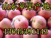 山东红富士苹果行情山东苹果产地