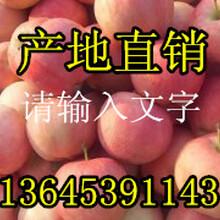 山東美八蘋果今日批發價格表圖片