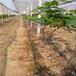 葡萄滴灌管丨葡萄水肥一体化丨灌溉排灌PE管厂家直销