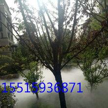 郑州景区雾森系统厂家图片