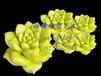 玫瑰花泡沫雕塑/芦荟多肉植物泡沫雕塑/植物泡沫道具定制优选武汉必耀雕塑艺术