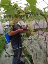 四川葡萄膨果器猕猴桃开放式浸果器环形喷头电动回流泵视频