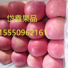 山东蒙阴苹果冷库苹果红富士苹果供应图片
