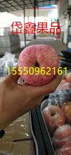 山东蒙阴苹果蒙阴红富士苹果蒙阴冷库苹果图片