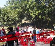 深圳举办员工活动九龙生态园农家乐好玩图片