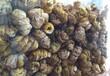 北海石斛滋补品北海石斛种植基地金斛源铁皮石斛多胶少渣