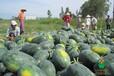 供应农副产品海产品干货