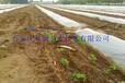 山西永和县农用工具滴灌管免费安装按需定制