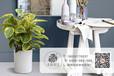成都温江区购买室内净化空气植物