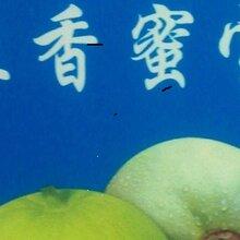 常年供应高糖(21%-26%)正香蜜宝甜瓜种子及各品种系列肥城桃图片