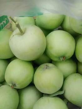 山东早熟藤木辽伏嘎啦苹果现已上市质优价廉货源充足