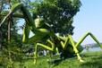 昆虫展览大型亚马逊仿真昆虫放大万倍昆虫展览出租