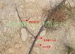 内蒙供应商/果树灌溉/质优价廉/设计安装