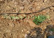 内蒙古供应/果树小管出流滴水管/果树好帮手