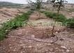 广西柑橙果树滴灌设备滴灌厂家直销