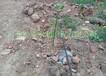 广西都安山葡萄果园灌溉工程项目设备