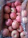 山东沂源县七十万亩有机红富士苹果最新价格