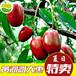 长期供应大量延川大红枣