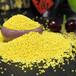 预售今年秋季新黄小米、香谷米、孕妇米颗粒饱满色泽金黄