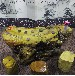 家有名木实木楠木根雕茶桌尺寸162-79-68