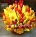 大量供应水果花模型,水果花束,菠萝花,草莓,哈密瓜,批发定制